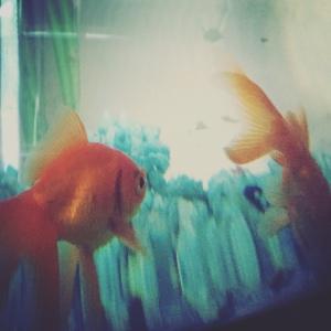 Fiskene