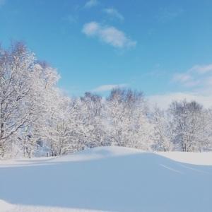 Vintertrær